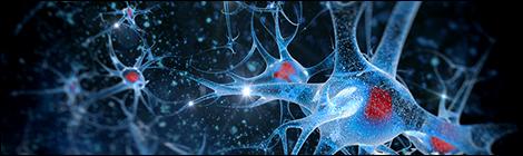 brain-health-main